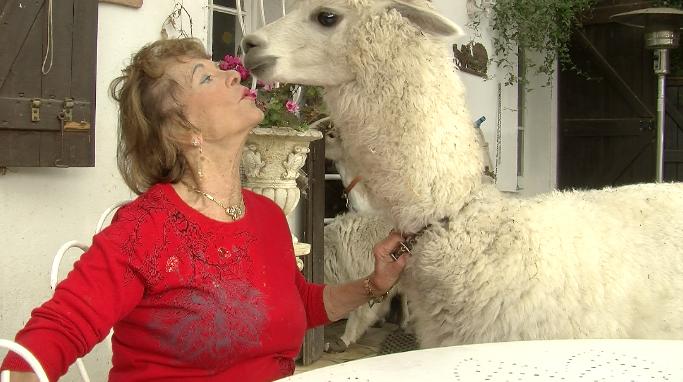 Soly-Ange Deschamps aime ses animaux comme si c'étaient ses enfants. @AngéliquePassebosc