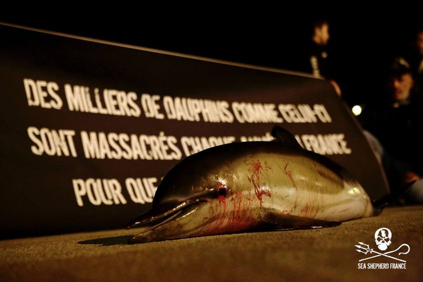 crédits - Sea Shepherd